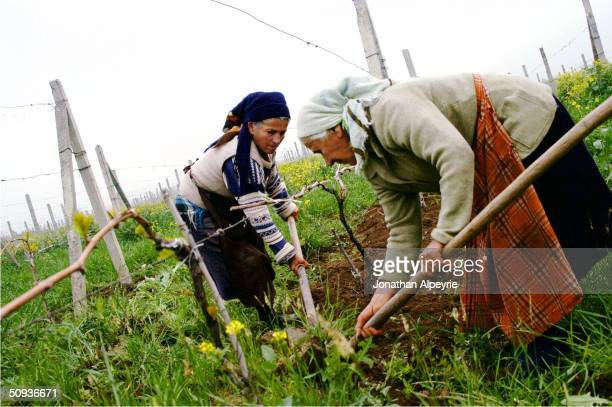 Locals working on a wine production property, cut away all extra vegetation growth April 26, 2004 in the Martouni Province in Nagorno-Karabakh,...