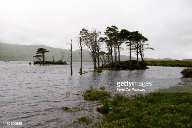 Loch Assynt near Lochinver, Highland, Scotland