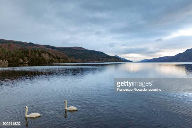 loch ness lake - loch ness monster stock pictures, royalty-free photos & images