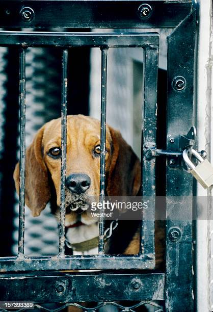 locked-up - dog pound stock pictures, royalty-free photos & images
