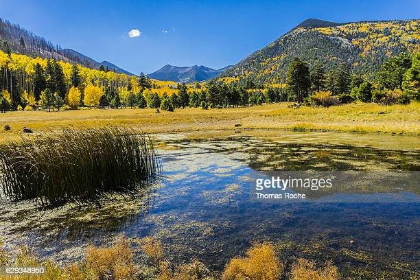 Lockett Meadow in the Fall