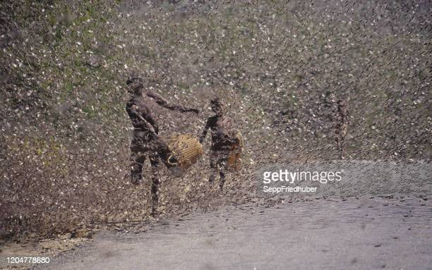 locust swarm in kenia - locust stock pictures, royalty-free photos & images