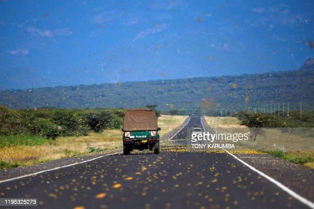 Locusts swarm acros a highway at Lerata village near Archers Post in Samburu county approximately 300 kilomters north of kenyan capital Nairobi on...