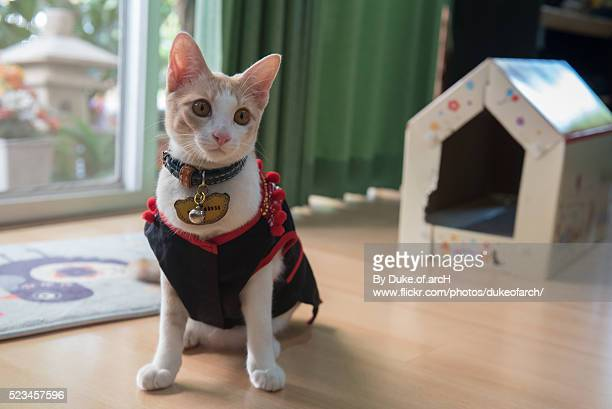 Lodchong : Cute Thai Cat