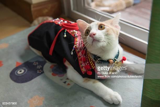 lodchong : cute thai cat - duke stockfoto's en -beelden