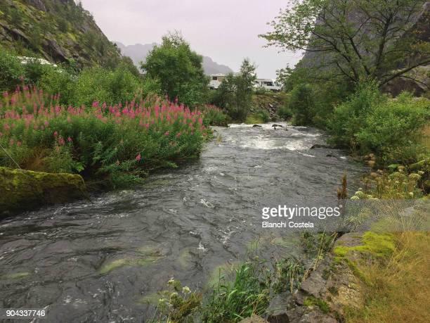 Lofoten Island in Norway in summer