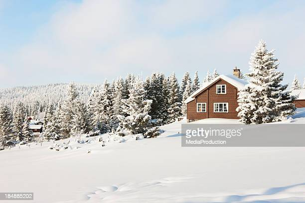log cabin in the woods - shack stock pictures, royalty-free photos & images