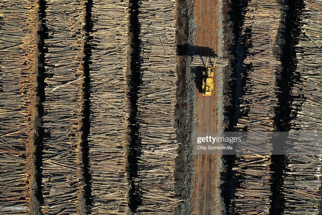 Montana Forests Struggle With Climate Change : Fotografía de noticias