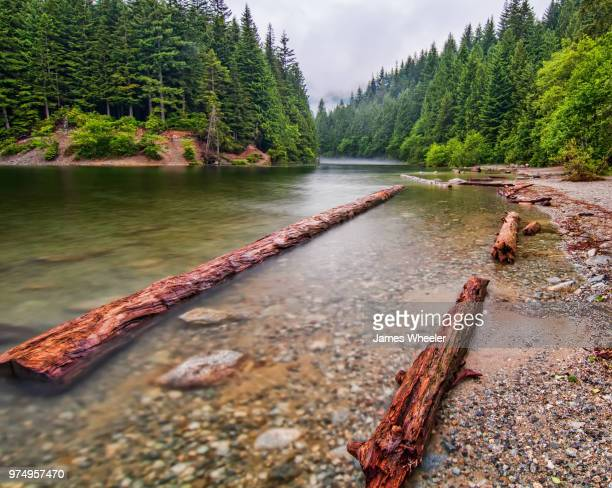 log locked shores - forrest wheeler stock pictures, royalty-free photos & images