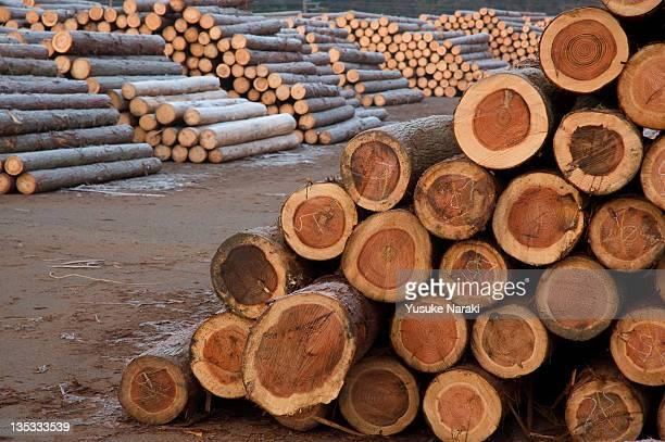 Log of woods