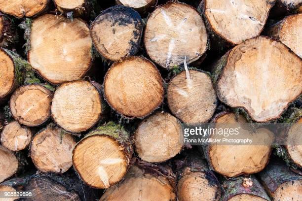 Log Pile, Forest Management