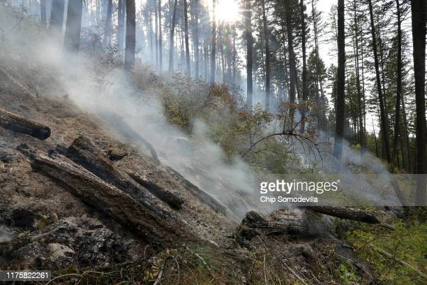 Log piles smolder after being harvested and burned as part of the Marshall Woods Restoration Project at the Rattlesnake National Recreation Area in...