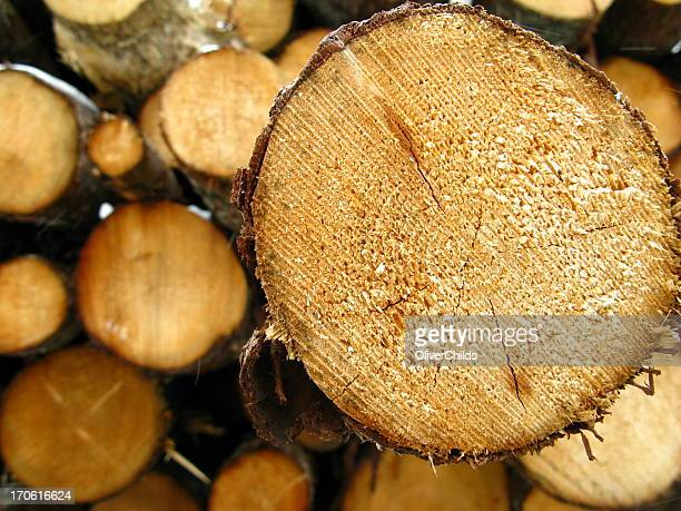 Log protruding from pile