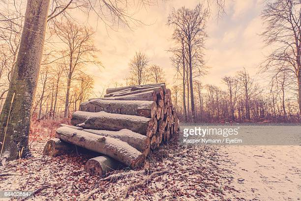 Log Stack On Snow Covered Field