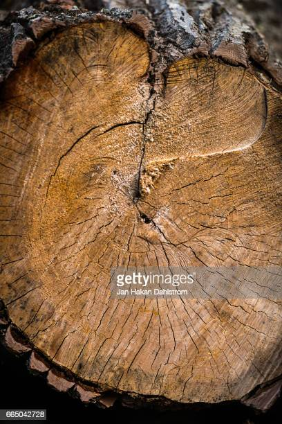 Log with growth rings