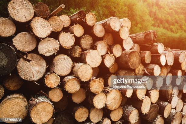 log wood background - lumber industry stock pictures, royalty-free photos & images