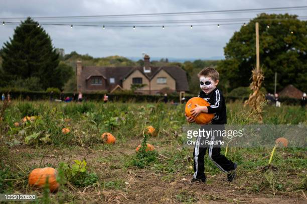Logan Forman carries a pumpkin back to his mum at Tulleys Farm Pick Your Own Pumpkin fields on October 17, 2020 in Turners Hill, near Crawley, United...