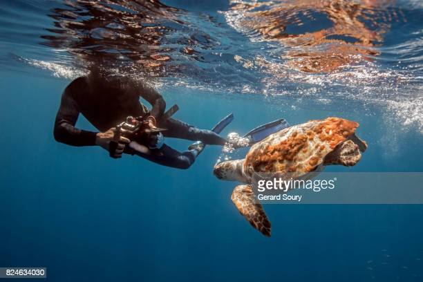 A Logerhead Turtle being filmed by a diver