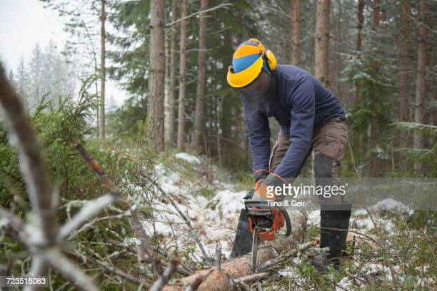 Logger sawing tree, Tammela, Forssa, Finland