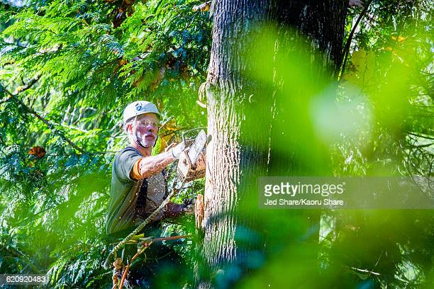 Logger using chainsaw on tree