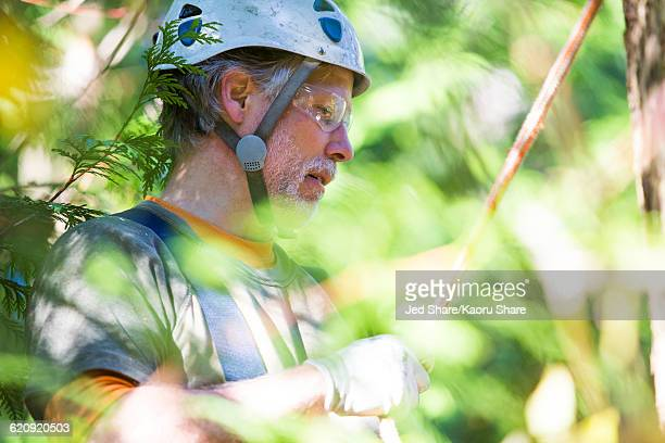 Logger wearing helmet in tree