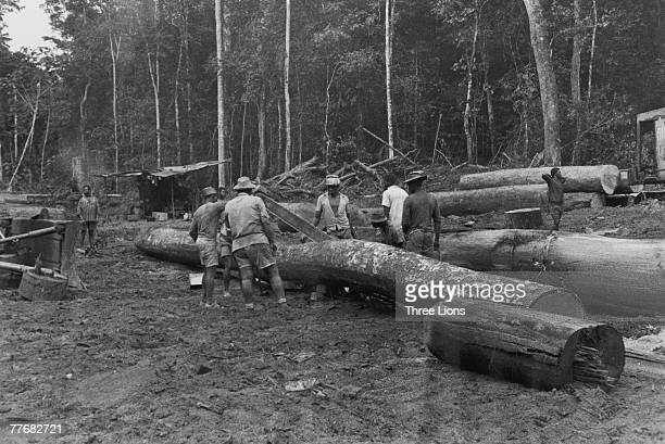 Loggers at work in the Rio Muni territory of Equatorial Guinea circa 1968