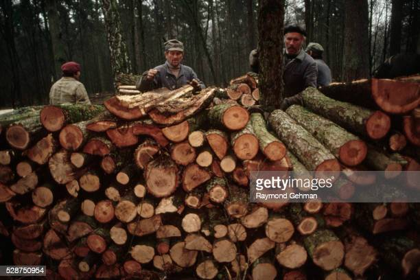 loggers loading cart - bialowieza forest stock pictures, royalty-free photos & images