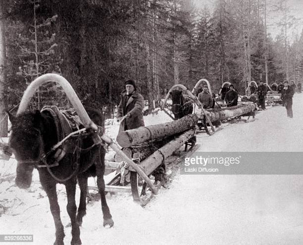 Loggers transporting wood needed for the construction of the White SeaBaltic Canal The canal was constructed between 1931 and 1933 by forced labor of...