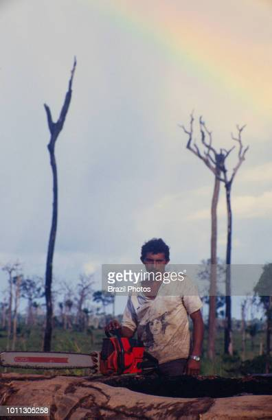 Logging Amazon rainforest clearance workers cut down trees using chainsaw in a slashedandburned patch of forest Acre State Brazil
