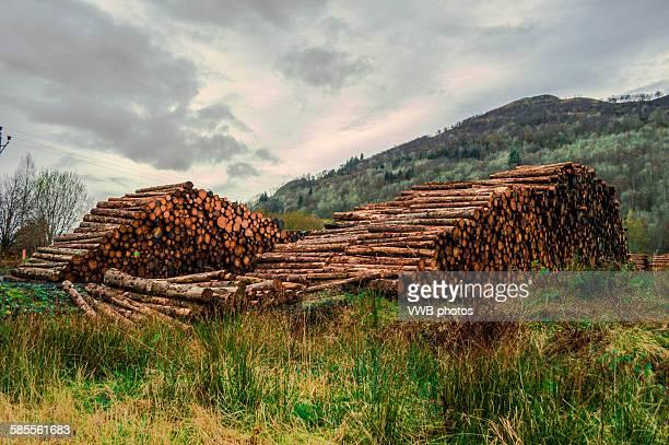 Logging by Loch Fyne