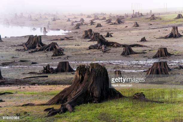 logging clearcut - destruction stock pictures, royalty-free photos & images
