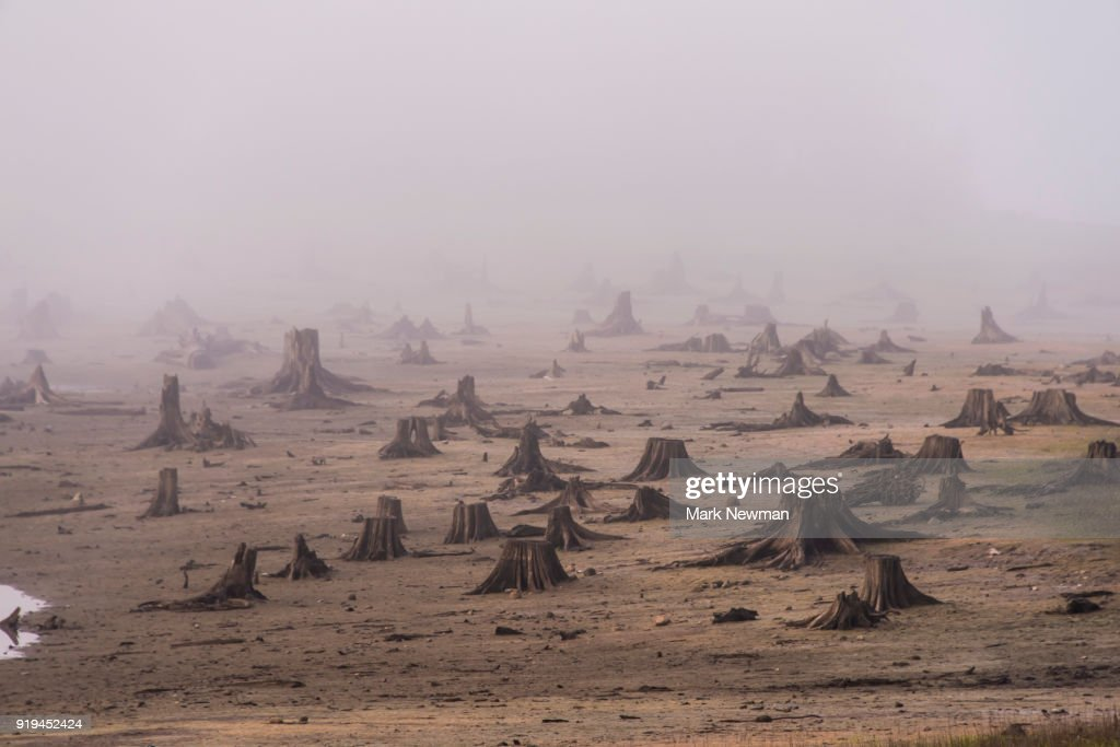 Logging Clearcut : Stock Photo