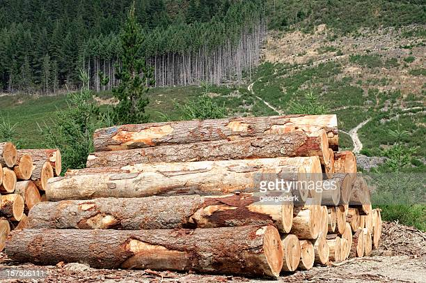 Connexion de l'industrie: Abattage de la forêt