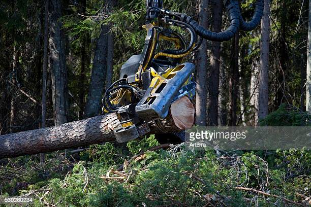 Logging industry showing timber / trees felled by forestry machinery / Timberjack harvester in pine forest