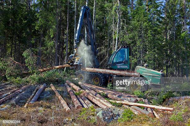 Logging industry showing timber / trees felled by forestry machinery / Timberjack harvester in pine forest.