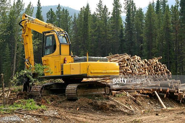 Logging # 5