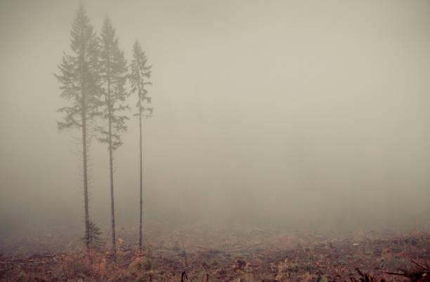 Logging remains