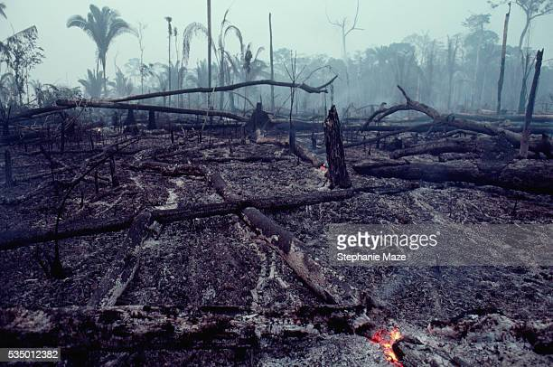 logging slash burned - deforestation stock pictures, royalty-free photos & images