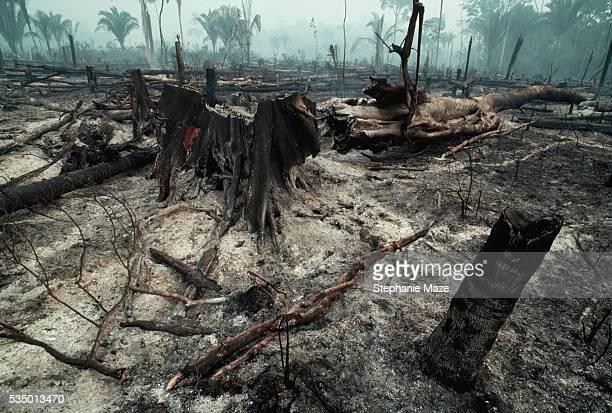 Logging Slash Burned
