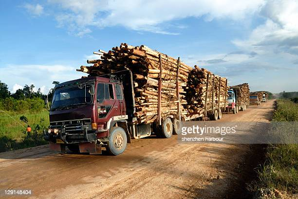 Logging transport in island of Sumatra