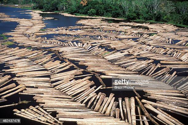 Logging transportation of tree truncks floating on river water Amazon rainforest deforestation