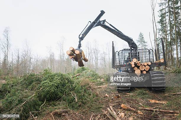 Logging vehicle carrying timber