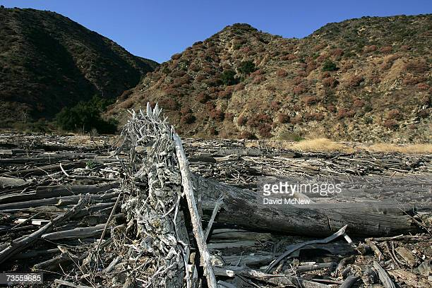 Logs and debris are left at the dry north end of San Gabriel Reservoir which remains dramatically low near the end of the rainy season when the...