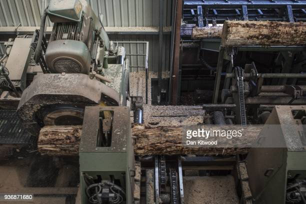 Logs are cut at AJ Scott sawmill on March 22 2018 in Doddington England The Doddington North Afforestation project has begun with the planting of...