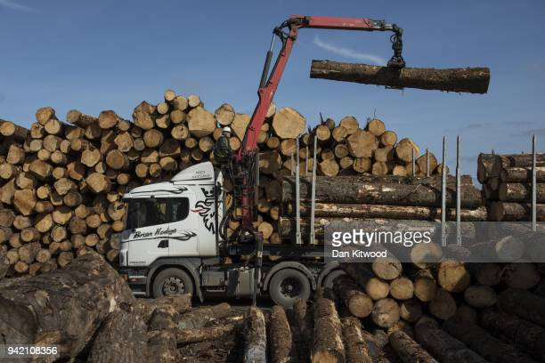 Logs are moved off lorries at AJ Scott sawmill on March 22 2018 in Doddington England The Doddington North Afforestation project has begun with the...