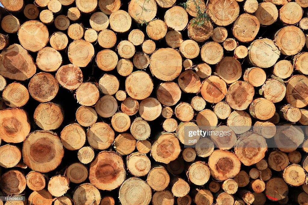 Logs in a stack - full frame XXXL : Stock Photo