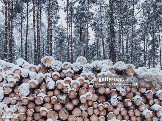 Logs in forest during winter