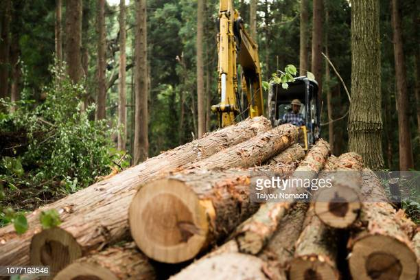 logs in forest - deforestation stock pictures, royalty-free photos & images