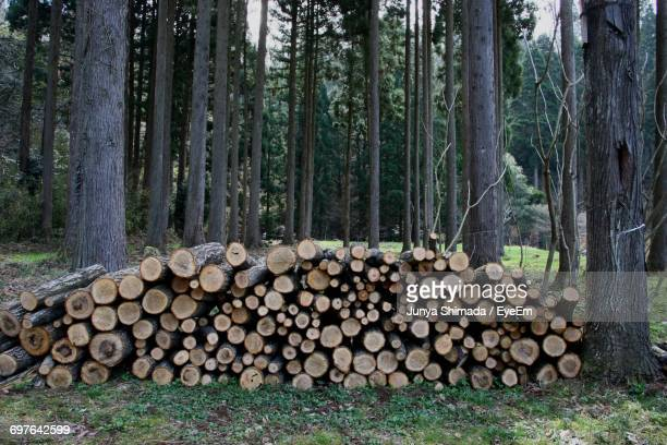 Logs In Forest