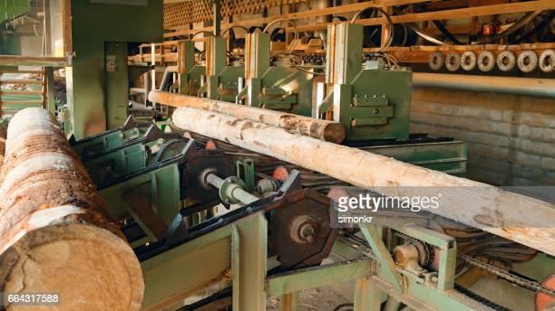 Logs loaded on conveyor belt